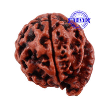 Load image into Gallery viewer, Nepalese Ganesh Rudraksha - Bead No. 117