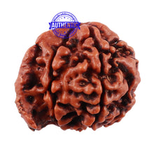 Load image into Gallery viewer, Nepalese Ganesh Rudraksha - Bead No. 119