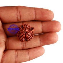 Load image into Gallery viewer, Nepalese Ganesh Rudraksha - Bead No. 153