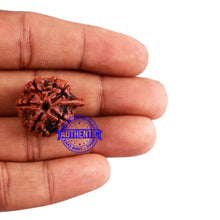 Load image into Gallery viewer, Nepalese Ganesh Rudraksha - Bead No. 96