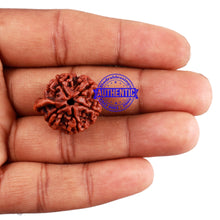 Load image into Gallery viewer, Nepalese Ganesh Rudraksha - Bead No. 97