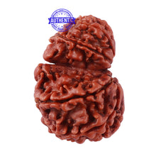 Load image into Gallery viewer, 10 Mukhi Nepalese Garbh Gauri Rudraksha - Bead No. 28