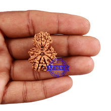 Load image into Gallery viewer, 12 Mukhi Nepalese Garbh Gauri Rudraksha - Bead No. 25