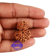 Load image into Gallery viewer, 12 Mukhi Nepalese Garbh Gauri Rudraksha - Bead No. 30