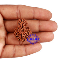 Load image into Gallery viewer, 7 Mukhi Nepalese Garbh Gauri Rudraksha - Bead No. 37