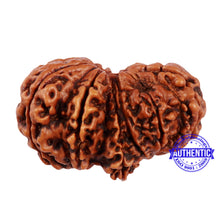 Load image into Gallery viewer, 12 Mukhi Gaurishankar Rudraksha with Ganesha  - Bead No. 76