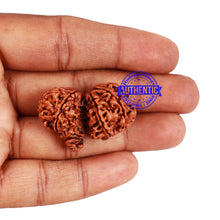 Load image into Gallery viewer, 10 Mukhi Gaurishankar Rudraksha with Ganesha  - Bead No. 77