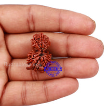 Load image into Gallery viewer, Gaurishankar Rudraksha with Ganesha  - Bead No. 48