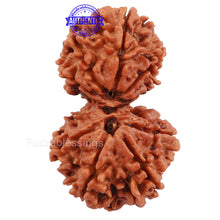 Load image into Gallery viewer, Gaurishanker  Nepalese Rudraksha Bead No. 52