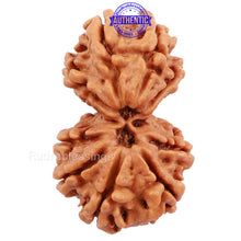 Load image into Gallery viewer, Gaurishanker  Nepalese Rudraksha Bead No. 55