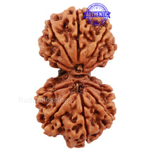 Load image into Gallery viewer, Gaurishanker  Nepalese Rudraksha Bead No. 60