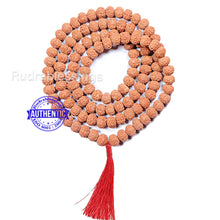 Load image into Gallery viewer, 9 mukhi Rudraksha Mala - Indonesian (108 + 1 beads) - 3