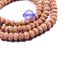 Load image into Gallery viewer, 10 mukhi Rudraksha Mala - Indonesian (108 + 1 beads) - 1