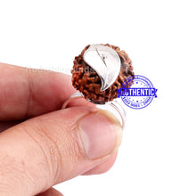 Load image into Gallery viewer, 9 Mukhi Indonesian Rudraksha Ring - 2