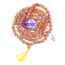 Load image into Gallery viewer, 5 mukhi Rudraksha mala with Accessory Shankh