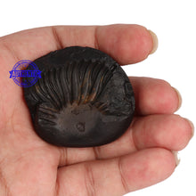 Load image into Gallery viewer, Shaligram - 51