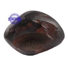 Load image into Gallery viewer, Sushirankita Matsya Shaligram - 80