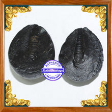 Load image into Gallery viewer, Shivling Shaligram - 1