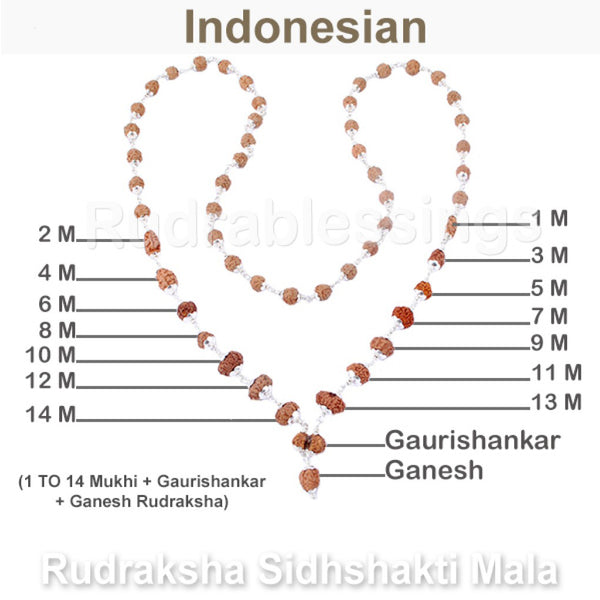 Rudraksha SidhShakti Mala from Indonesia (Mini size beads) - 2 (Pure Silver)