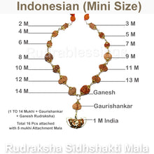 Load image into Gallery viewer, Rudraksha SidhShakti Mala from Indonesia (Mini size beads) - 1