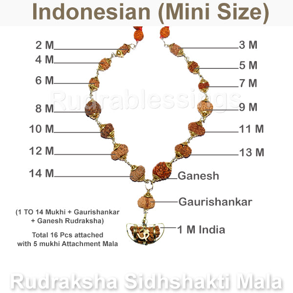 Rudraksha SidhShakti Mala from Indonesia (Mini size beads) - 1