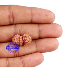 Load image into Gallery viewer, Trijudi Rudraksha from Indonesia Bead No. - 40