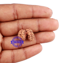 Load image into Gallery viewer, Trijudi Rudraksha from Indonesia Bead No. - 41