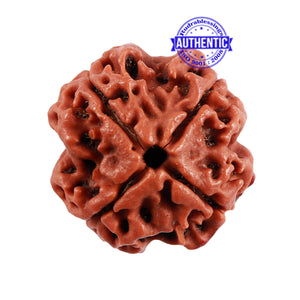 4 Mukhi Rudraksha with Om Marking - Bead 2