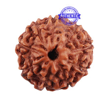 Load image into Gallery viewer, 9 Mukhi Indonesian Rudraksha with Swastik Marking