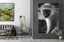 Laden Sie das Bild in den Galerie-Viewer, MONKEY EYES | Poster & Leinwand