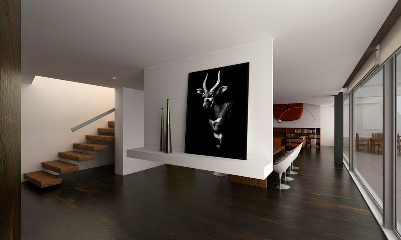 The Noble Bongo - Black - 50x70cm