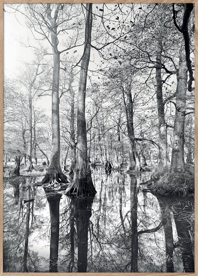 Forest Reflection - 50x70cm