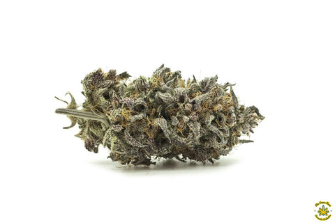 Purple Jack Herer
