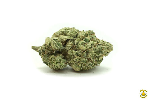 GT Select: Sonoma Glue *NEW*