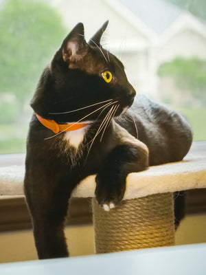 Collier TANGERINE Chat