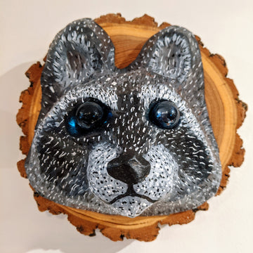 Vegan Taxidermy - Raccoon (Dark Face)