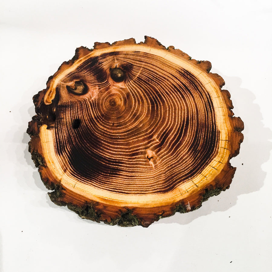 Set of Four Live Edge Black Locust Trivets