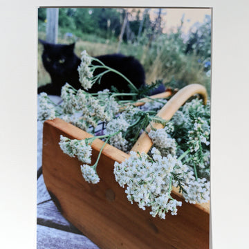 Yarrow Harvest Postcard