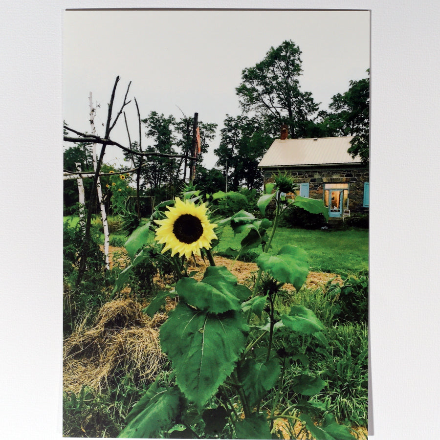 Sunflower & Farmhouse Postcard