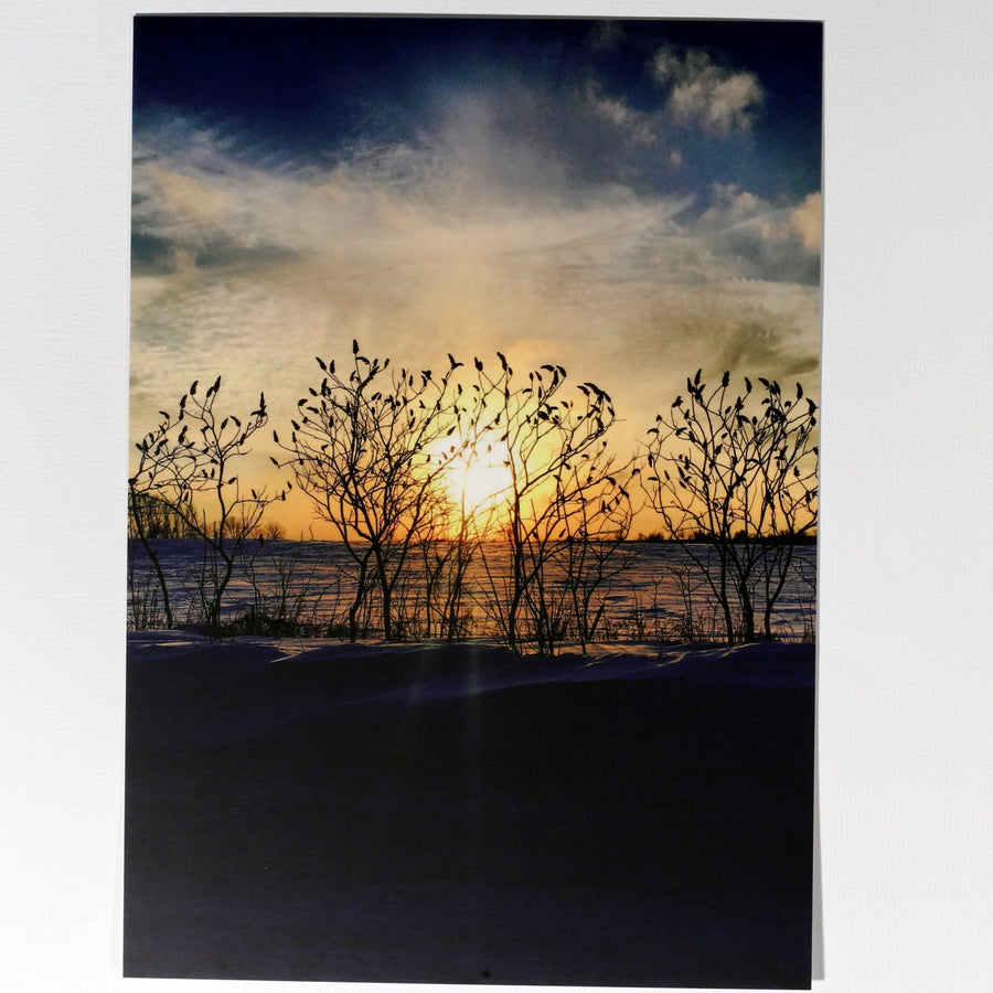 Sunset through the Sumacs Postcard