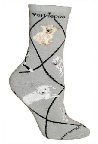 Yorkiepoo on Gray Sock Size 10-13