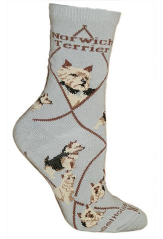 Norwich Terrier on Gray Sock Size 9-11