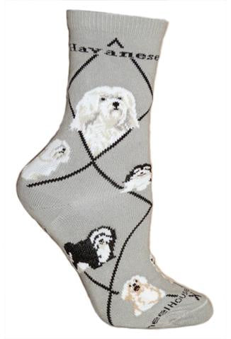 Havanese on Gray Sock Size 10-13