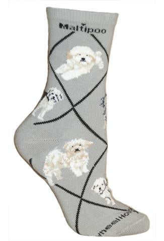 Maltipoo on Gray Sock Size 10-13