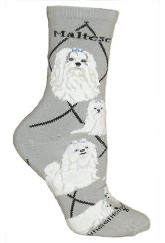 Maltese on Gray Sock Size 10-13