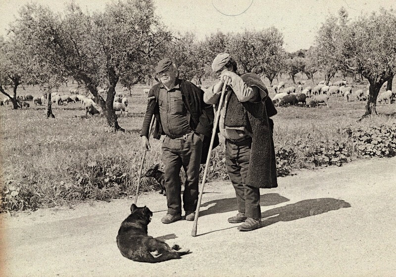 Portuguese Shepherds wearing working leather boots