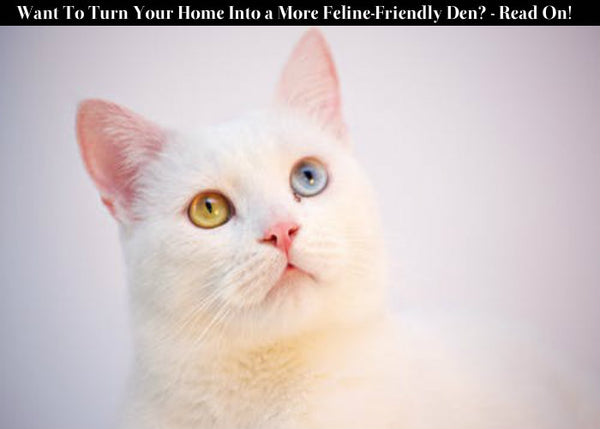 Want To Turn Your Home Into a More Feline-Friendly Den? - Read On!