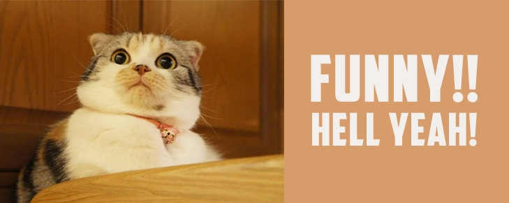 Are Cats Funny? 5 Reasons Prove That They Definitely Are!