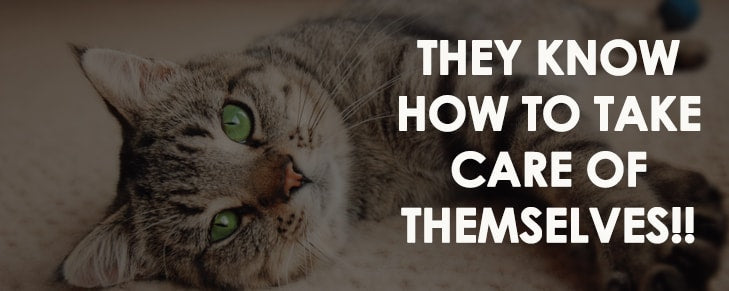 7 Things You Didn't Know About Cats, But You Should!