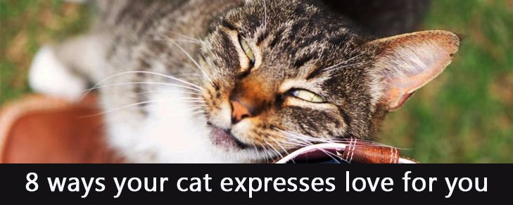 8 Ways Your Cat Expresses Love for You